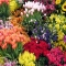 Mariflor Florists