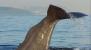 Walbeobachtung in Tarifa
