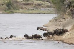 Safari de 3 días en Masai Mara en un campamento de lujo
