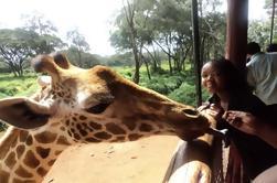 Giraffe Centre y Elephant Orphanage Tour de Nairobi