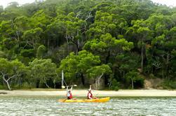 Kayak y Bushwalking Day Tour de la Costa de Oro incluyendo Currumbin Wildlife Sanctuary