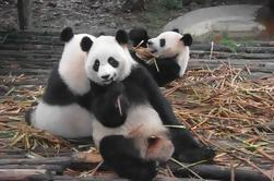 Excursión Privada de un Día en Panda Gigante en Chengdu