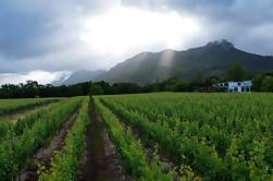 Vine Hopper: Hop-On Hop-Off Wine Tour - Eastern Route