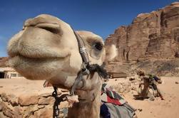 Excursão turística a Petra de Amman