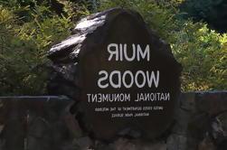Excursión de un día a Muir Woods, Sausalito y Tiburon desde San Francisco