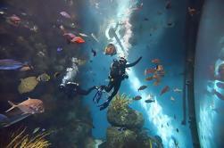 Visite privée du zoo de Pékin, de l'aquarium de Pékin et de Hutong