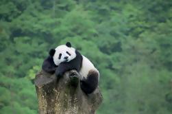 Pequim Private Tour para Mutianyu Grande Muralha e Panda House em Pequim Zoo