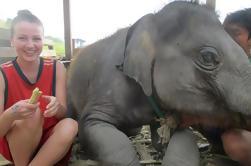 2 jours au parc de retraite Elephant avec hébergement chez l'habitant et repas à Chiang Mai