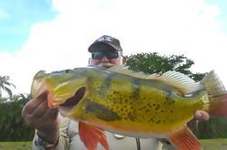 Todo el día Miami Peacock Bass Fishing Trip