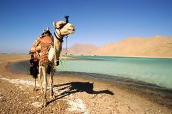 Safari de camellos de 2 horas a Wadi Bida o Laguna Azul de Dahab