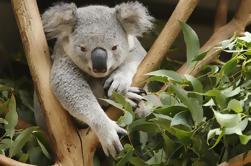Excursión de un día a Healesville Sanctuary y Yarra Valley desde Melbourne