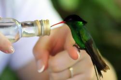 Rocklands Bird Sanctuary y Montego Bay Destacados Tour