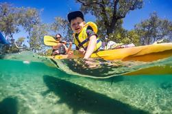 Excursión de kayak de Costa de Oro de medio día incluyendo el Parque Nacional Burleigh Heads, Tallebudgera Creek y el Parque de Vida Silvestre David Fleay