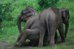 Baanchang Elephant Park Experiencia de Conservación de Chiang Mai