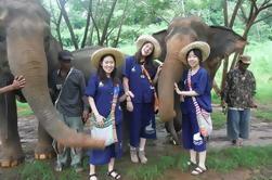 Elephant's Heaven: Experiencia de Elefante de medio día en Baanchang Elephant Park en Chiang Mai