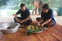 Elephant's Day Care en Baanchang Elephant Park en Chiang Mai