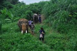 Día del Amigo del Elefante: Experiencia de elefante de día completo en Baanchang Elephant Park en Chiang Mai