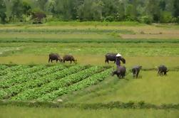 Half-Day Hoi An Countryside and Villages Tour by Bike