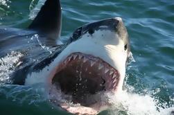Shark Cage Diving Tour em Gansbaai com Transferências Privadas da Cidade do Cabo