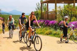 Tour de Bicicleta y Vino en el Valle del Vino de Casablanca