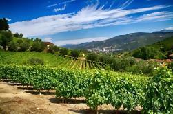 Into the North - Excursão de degustação de vinhos em pequenos grupos
