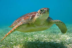Tortugas, Snorkel y Cenotes Aventura en Akuma