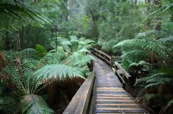 Cuevas de Hastings en grupo pequeño y excursión de un día de AirWalk al bosque de Tahune desde Hobart