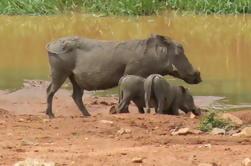 Excursão de um dia para o Safari de Pilanesberg a partir de Joanesburgo ou Pretória