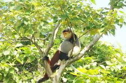 Tour de manchado de la fauna de Son Tra de medio día de Da Nang