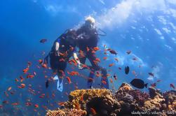 Mar Rojo Introducción al buceo durante todo el día