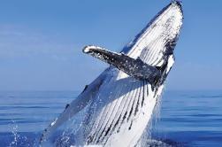 Combo de observación de ballenas en Cabo San Lucas