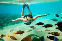 Compras en Cabo San Lucas, City Tour y Snorkel Tour