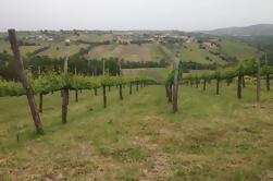 Tour de degustación de vinos en la provincia de Avellino