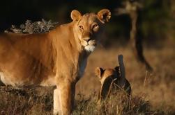 Excursión de un día para la conservación de vida silvestre de Ol Pejeta desde Nairobi