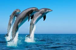 Nadar con delfines salvajes en Hurghada