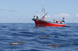 Observación de ballenas y delfines en las Islas Canarias