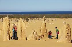 Excursión de un día a Pinnacles desde Perth Incluyendo Caversham Wildlife Park y Lancelin Dunes Sandboarding