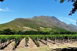 Stellenbosch Winelands Excursión de medio día guiada desde Ciudad del Cabo