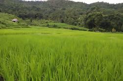 Excursión Trekking natural de la selva de Chiang Mai durante todo el día