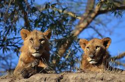 Masai Mara de 4 días y Safari de Nakuru desde Nairobi