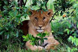 Safari privado de Masai Mara de 3 días desde Nairobi