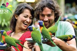 Santuario de Vida Silvestre de Currumbin y Día Mundial de Frutas Tropicales desde Gold Coast