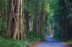 O'Reilly y Tambourine Mountain Rainforest Safari de la Costa de Oro