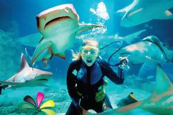Excursión de un día al acuario y Mooloolaba en el mundo submarino de Gold Coast