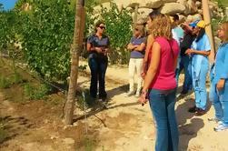 Passeio de vinhos e Degustação de Vinhos em Quinta do Vinho Verde