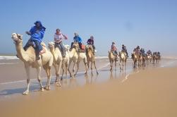 6-Hour Camel Ride à Essaouira avec Pique-nique
