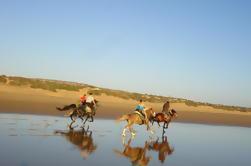 Promenade à cheval sur la plage à Essaouira