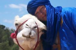 Promenade à dos de chameau sur la plage d'Essaouira