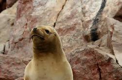 Excursão do Grupo Ilhas Ballestas de Paracas