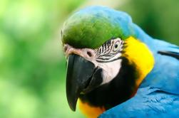 4-daagse jungle van Peru Tambopata Nature Reserve